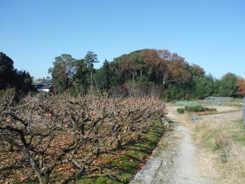 グラベルロードで奈良散歩_b0332867_21072353.jpg