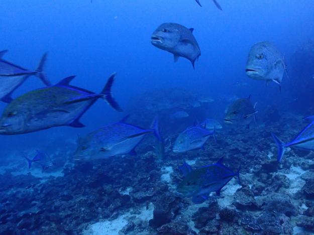 お魚い~~っぱい!潜って食べて潜って食べてのクルーズ生活♪  COCO IS./COSTA RICA_e0184067_16283837.jpg