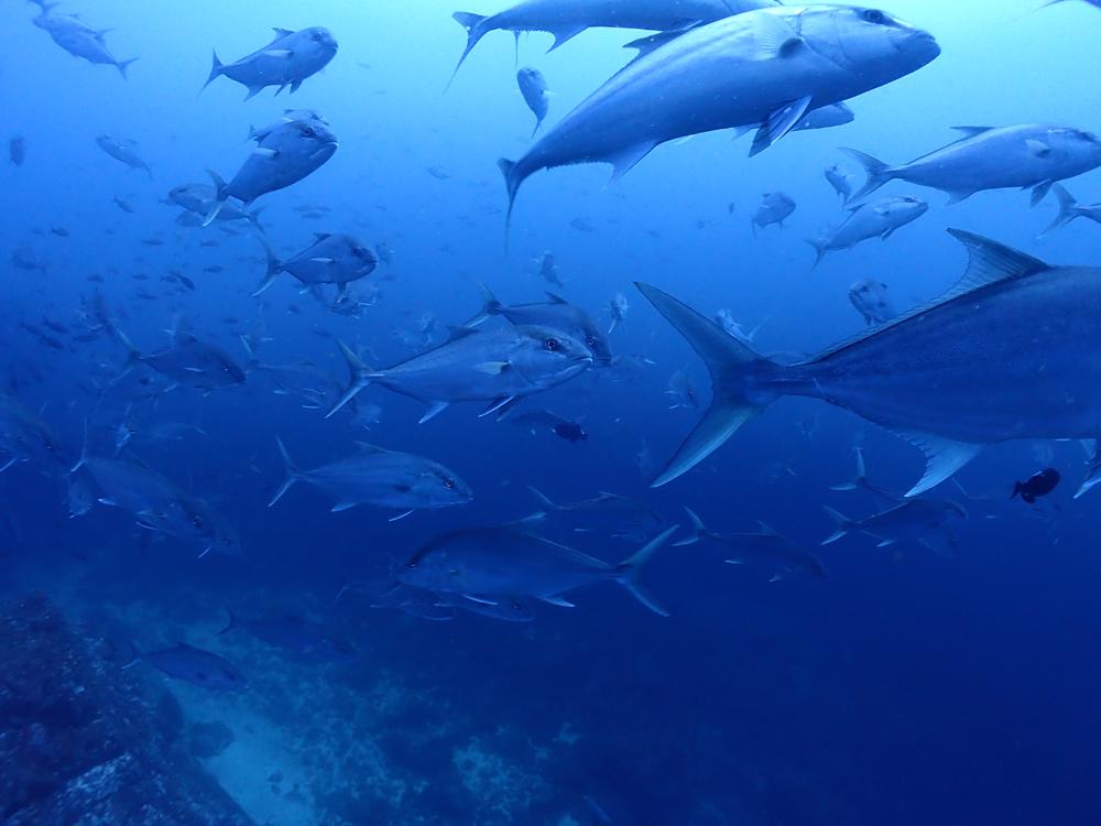 お魚い~~っぱい!潜って食べて潜って食べてのクルーズ生活♪  COCO IS./COSTA RICA_e0184067_16293091.jpg