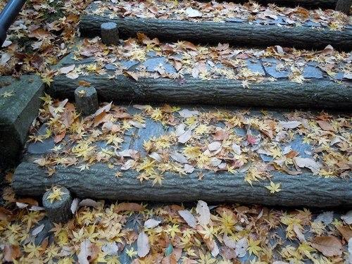 最後の紅葉を見ながら蔓を採る_b0102572_23122954.jpg