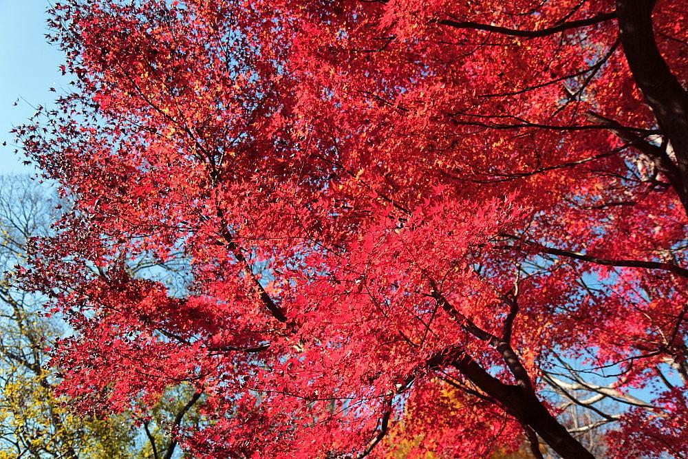 調布市 落葉の野川公園 その3_e0165983_10252982.jpg