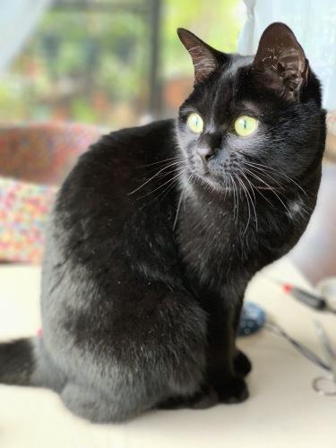 猫ベット_e0358096_16201370.jpeg