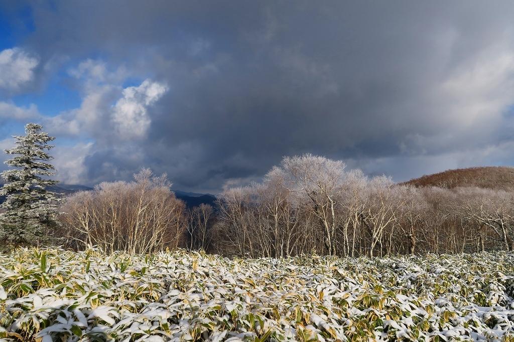雪の少ないイチャンコッペ山、2019.12.20_f0138096_21592069.jpg