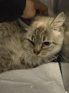 【猫・移動先募集】持込5匹と捕獲3匹(12/21訪問)_f0242002_15552641.jpg