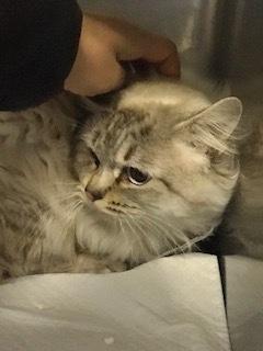 【猫・移動先募集】持込5匹と捕獲3匹(12/21訪問)_f0242002_15553475.jpg