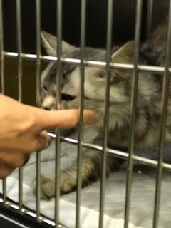 【猫・移動先募集】持込5匹と捕獲3匹(12/21訪問)_f0242002_15590036.jpg