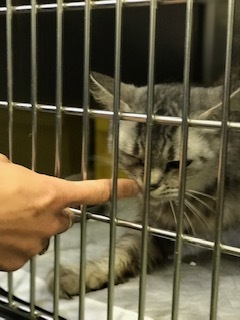 【猫・移動先募集】持込5匹と捕獲3匹(12/21訪問)_f0242002_15590903.jpg