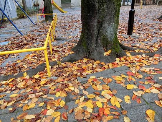 落ち葉がいっぱい_b0255303_09192761.jpg