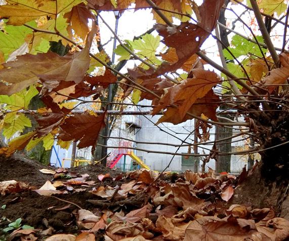 落ち葉がいっぱい_b0255303_09195597.jpg