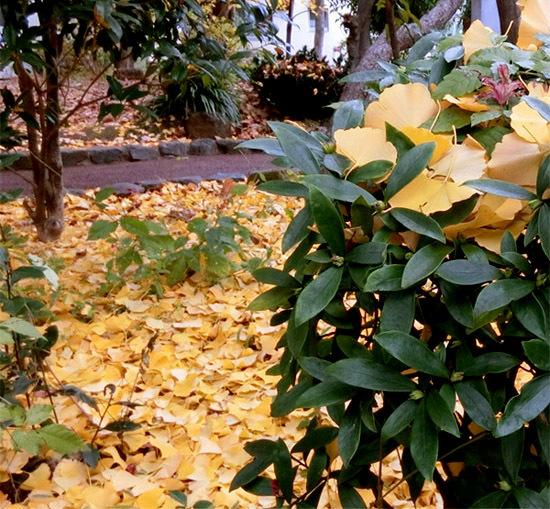 落ち葉がいっぱい_b0255303_09200955.jpg
