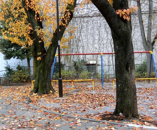 落ち葉がいっぱい_b0255303_09203626.jpg