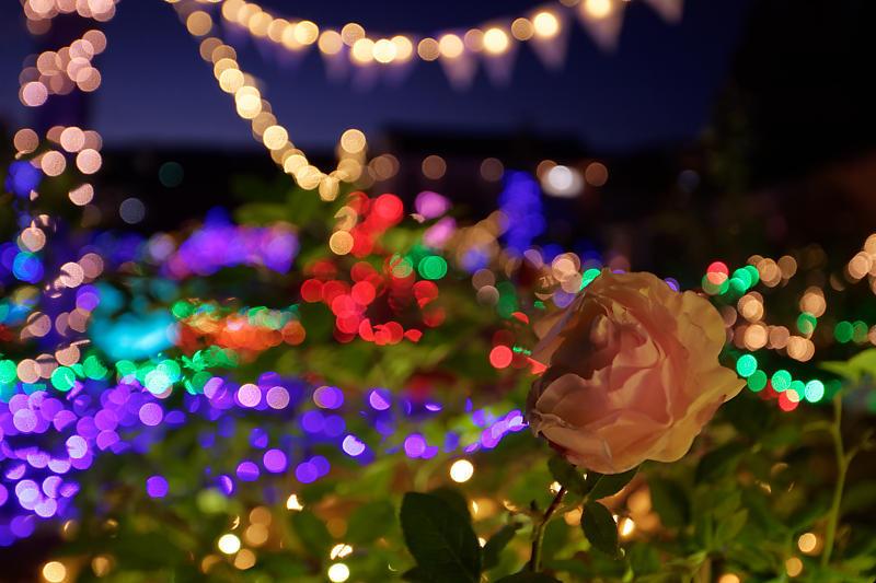 クリスマスイルミネーション@びわ湖大津館 2019イルミネーション「光のおもちゃの世界」_f0032011_17391068.jpg