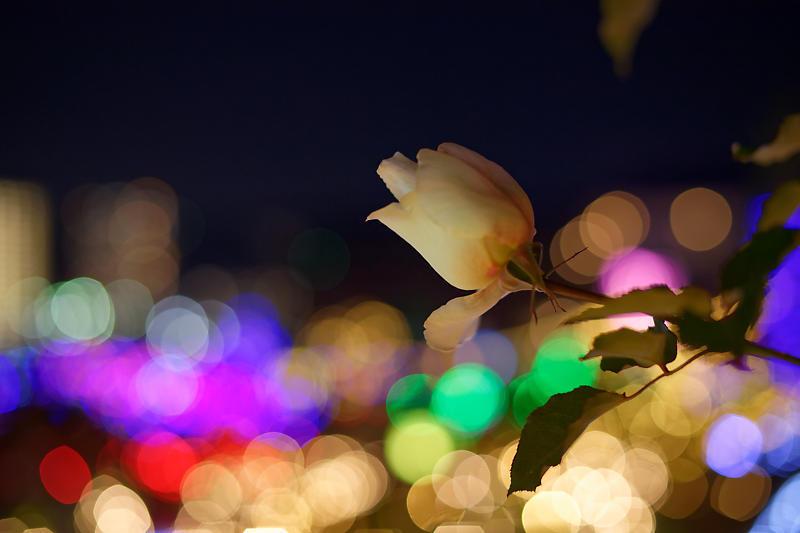 クリスマスイルミネーション@びわ湖大津館 2019イルミネーション「光のおもちゃの世界」_f0032011_17423571.jpg