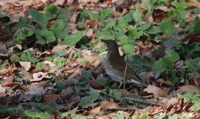 久しぶりのMFの森での探鳥(エナガ)_f0239515_1802423.jpg
