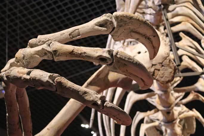 恐竜博2019~デイノケイルス【後編】_b0355317_22282021.jpg