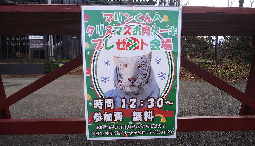 2019.12.21 東北サファリパーク☆ホワイトタイガーのマリンくん【White tiger】_f0250322_22205655.jpg