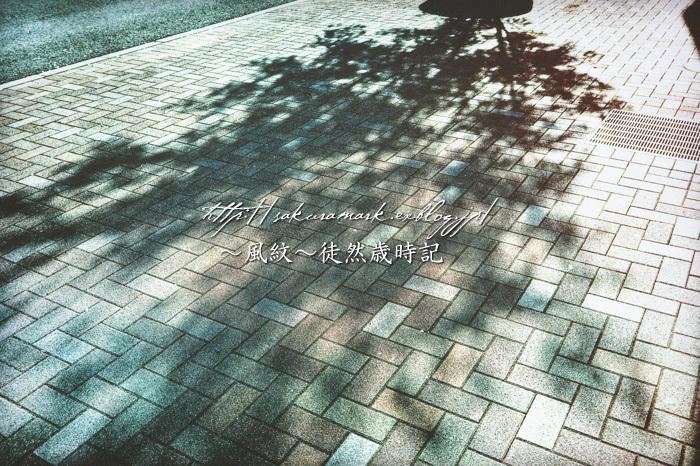 影葉樹。_f0235723_19585241.jpg