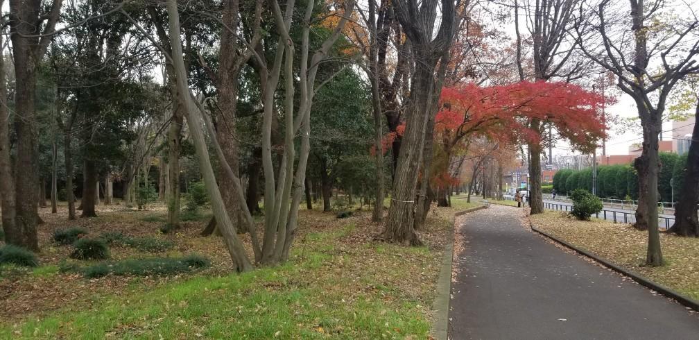 ♪砧公園散策~忘年会_d0162225_23365596.jpg
