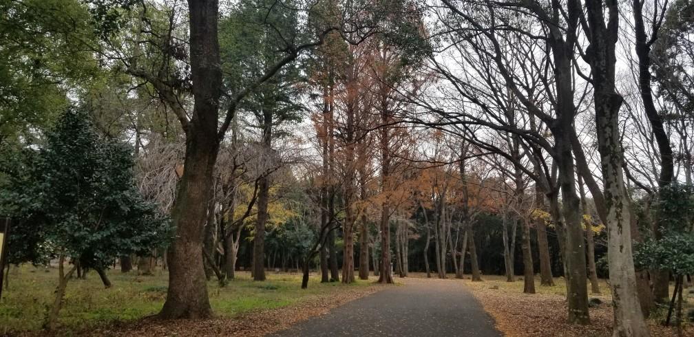♪砧公園散策~忘年会_d0162225_23365876.jpg