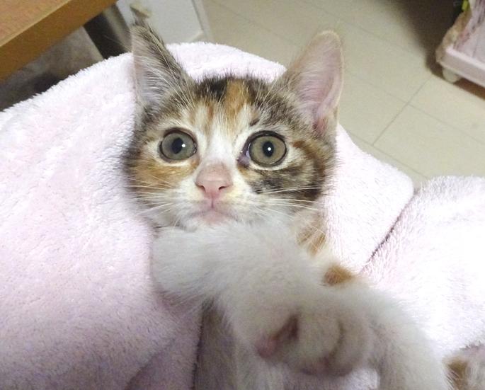 やっと子猫20匹になった!_d0165461_01245433.jpg