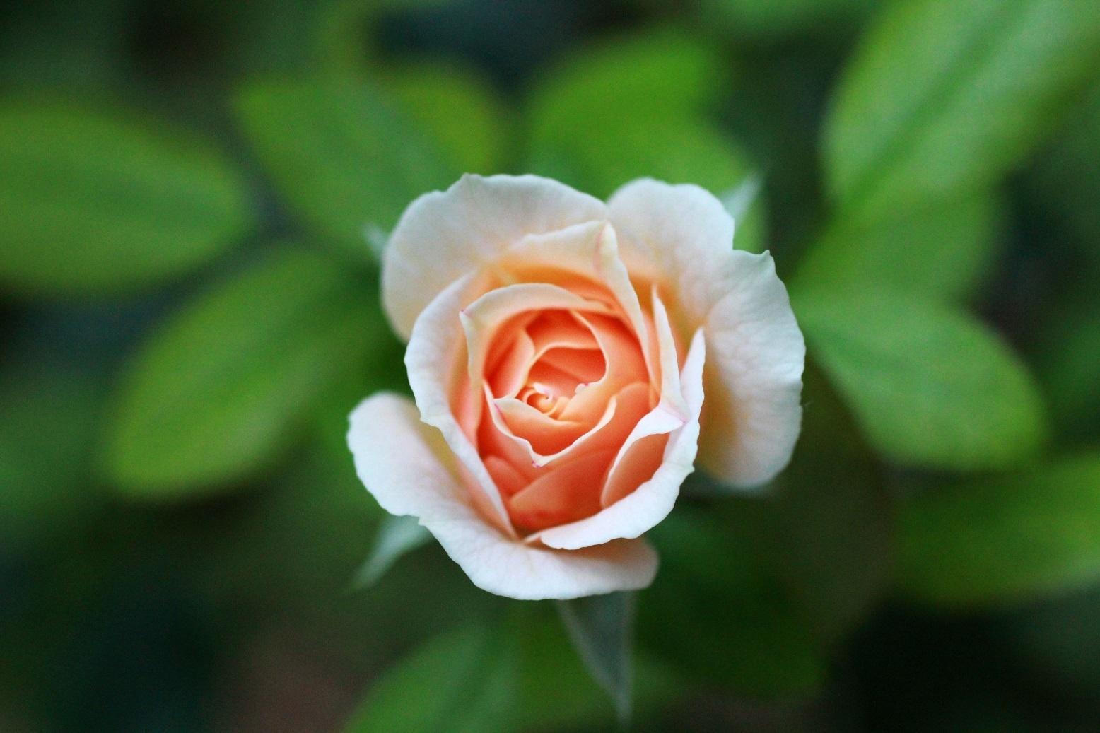 ガーデンオブローゼス ~冬至前日の薔薇~_a0107574_17074739.jpg