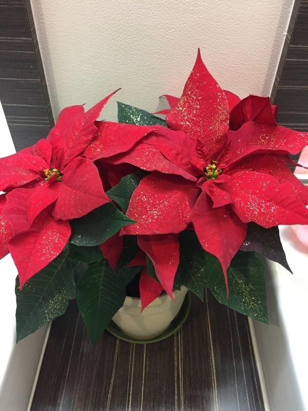 病院もクリスマス!_d0264876_08180526.jpeg