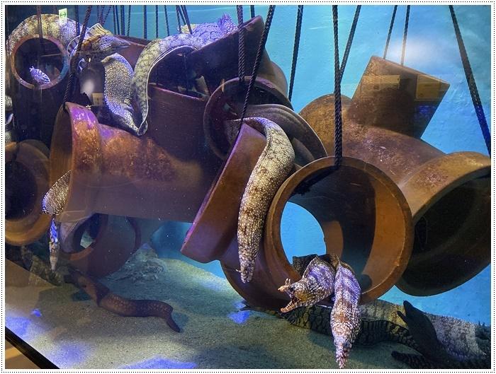 愛知県でのお出かけ その1 小さな小さな、でも魅力的な竹島水族館(11月24日)_b0175688_00095904.jpg