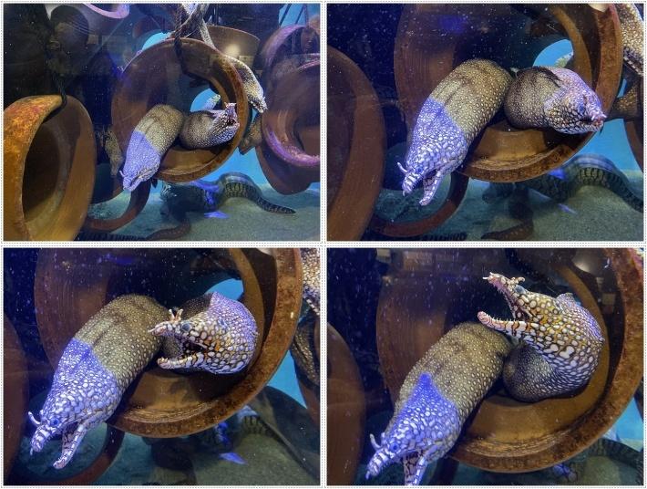 愛知県でのお出かけ その1 小さな小さな、でも魅力的な竹島水族館(11月24日)_b0175688_00101555.jpg
