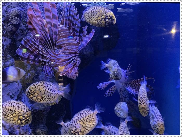 愛知県でのお出かけ その1 小さな小さな、でも魅力的な竹島水族館(11月24日)_b0175688_00113799.jpg