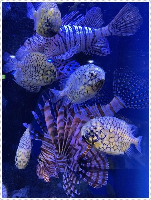 愛知県でのお出かけ その1 小さな小さな、でも魅力的な竹島水族館(11月24日)_b0175688_00114272.jpg