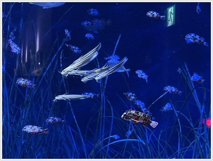 愛知県でのお出かけ その1 小さな小さな、でも魅力的な竹島水族館(11月24日)_b0175688_00115312.jpg