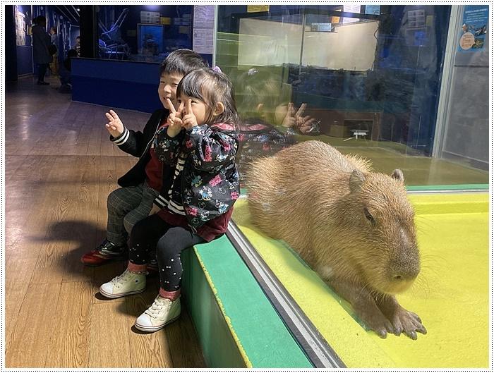 愛知県でのお出かけ その1 小さな小さな、でも魅力的な竹島水族館(11月24日)_b0175688_00151245.jpg