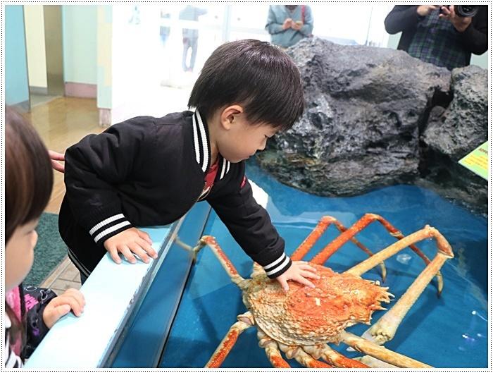 愛知県でのお出かけ その1 小さな小さな、でも魅力的な竹島水族館(11月24日)_b0175688_00202535.jpg