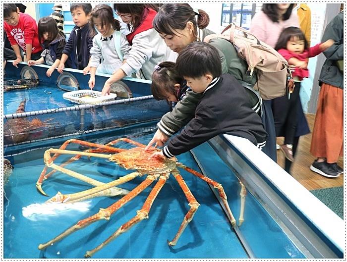 愛知県でのお出かけ その1 小さな小さな、でも魅力的な竹島水族館(11月24日)_b0175688_00202937.jpg