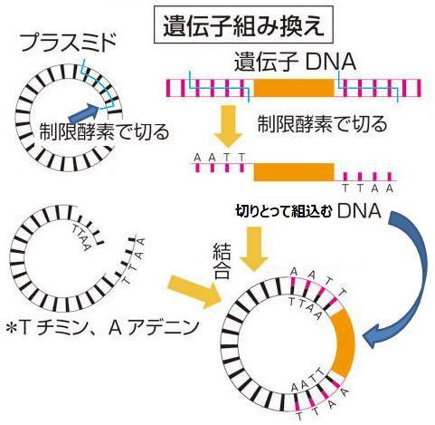 ⑦ 23.3 遺伝子組換え作物の栽培・保管・販売_b0391989_16341022.jpg