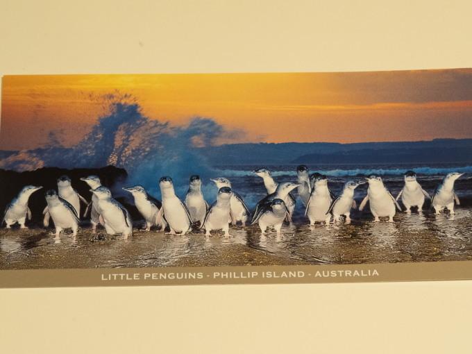 2019メルボルン・タスマニア・シドニーvol.3~可愛いペンギンパレード~_f0276498_20232551.jpg