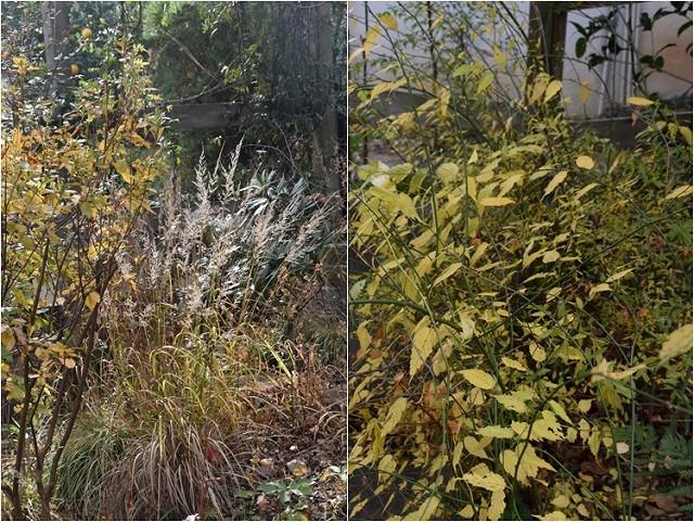 冬至直前の12月18日の庭。_c0124100_17363857.jpg