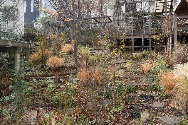 冬至直前の12月18日の庭。_c0124100_17365457.jpg