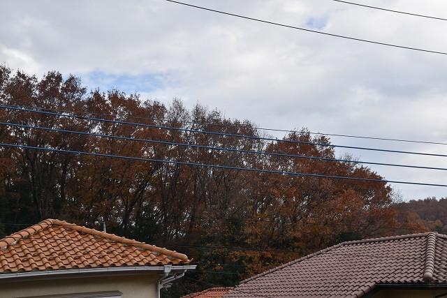 冬至直前の12月18日の庭。_c0124100_17365906.jpg