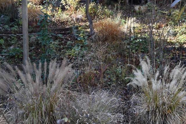 冬至直前の12月18日の庭。_c0124100_17381764.jpg