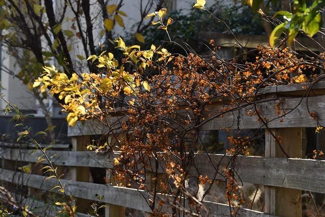 冬至直前の12月18日の庭。_c0124100_17382182.jpg