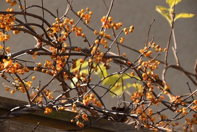 冬至直前の12月18日の庭。_c0124100_17382562.jpg