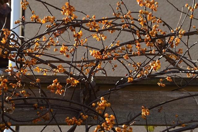 冬至直前の12月18日の庭。_c0124100_17383008.jpg