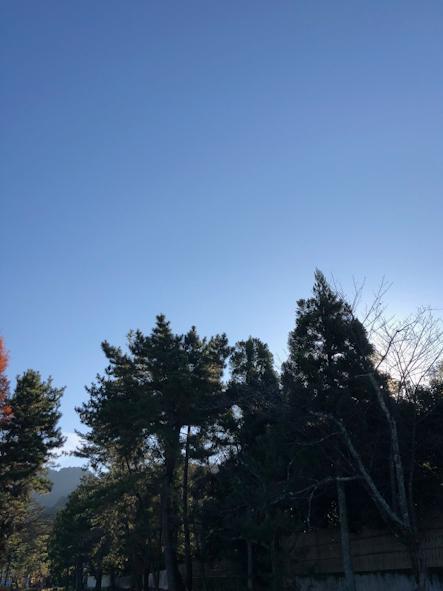 ノエルから迎春のコンポジション@京都出張レッスン_b0208604_06082287.jpg