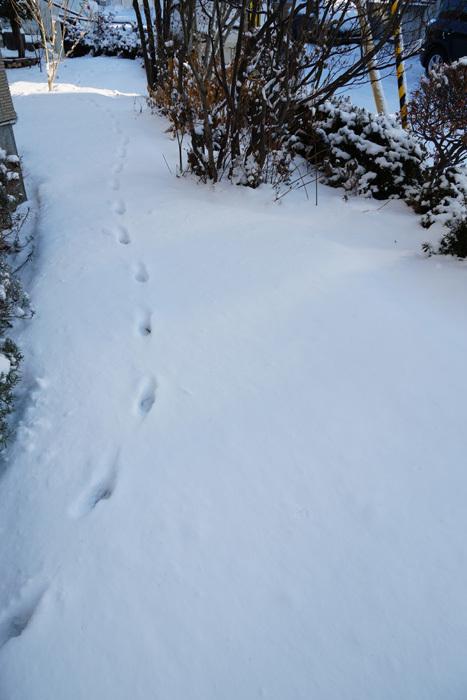 雪降らないなぁ~_b0019313_16330843.jpg