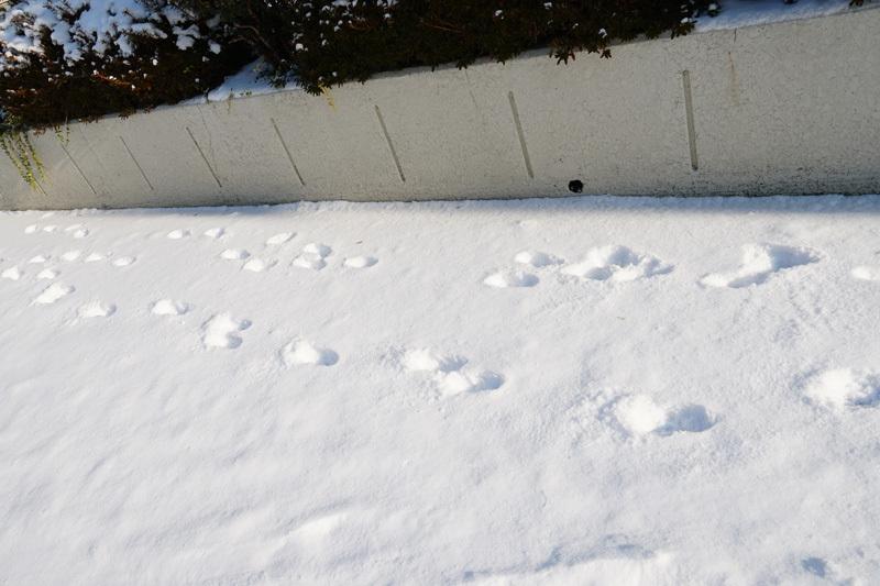 雪降らないなぁ~_b0019313_16340237.jpg