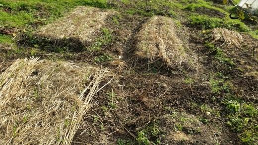 収穫いろいろ_f0208315_16143998.jpg