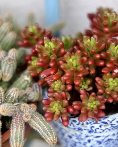 冬支度のお庭の様子_c0366722_11433794.jpeg