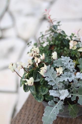 冬支度のお庭の様子_c0366722_11441837.jpeg