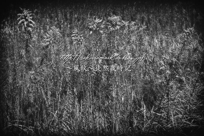 花葬。_f0235723_21215699.jpg
